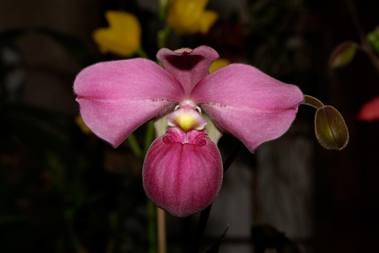 Expo-vente d'Orchidées à l'Union-Toulouse les 4,5 et 6 Novembre 2016 Expo_2016_14