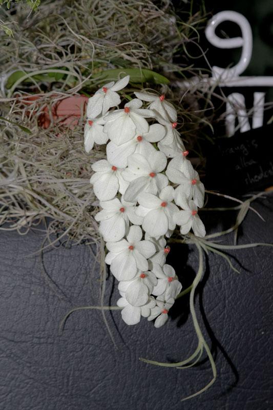 Expo-vente d'Orchidées à l'Union-Toulouse les 4,5 et 6 Novembre 2016 Expo_2016_7