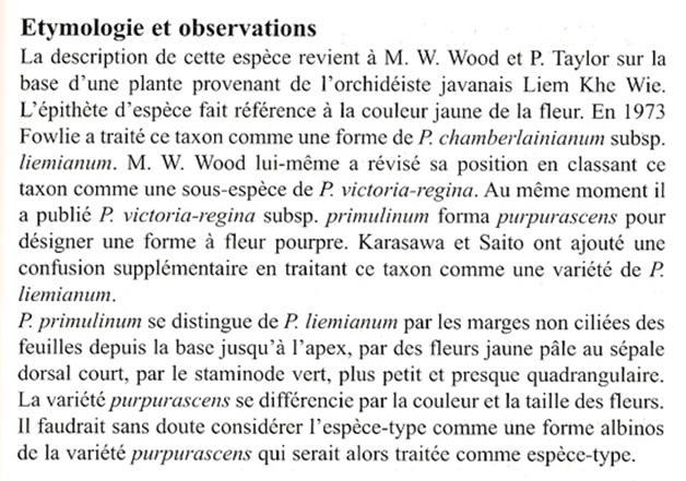 Paphiopedilum primulinum  Primulinum_texte2